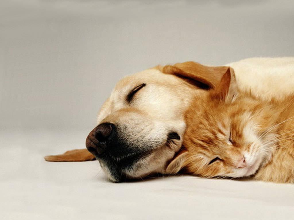 Dogsandcatssleep